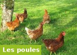 Des poules chez soi